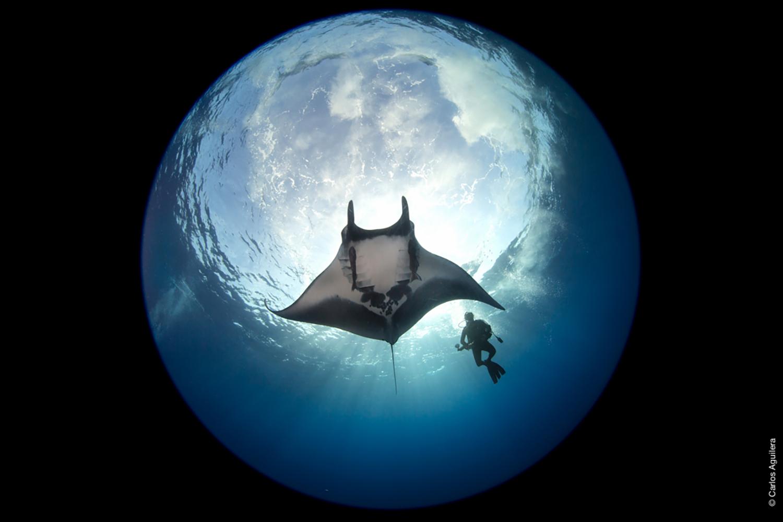 Fotoreise nach Mexiko Unterwasser Fotos